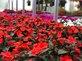 Ornamental Greenhouses Harriman, TN 37748