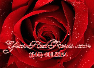 Your Red Roses in Tremont - Bronx, NY 10457