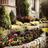 KC Lawn in Frisco, TX 75035 Landscape Gardeners