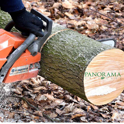Panorama Tree Care: Tampa Tree Services in Bayside West - Tampa, FL 33611 Tree Services