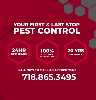 Last Stop Pest Control | 24Hours Newark Pest Control in Forest Hill - Newark, NJ Pest Control Services