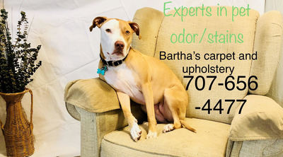 Bartha's Carpet and Upholstery Cleaning in Fairfield, CA 94534 Carpet & Rug Cleaners Water Extraction & Restoration