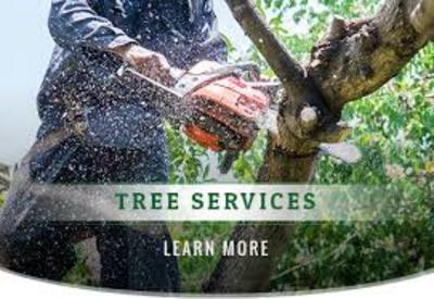 tree service in lasvagas in Downtown - Tampa, FL 33602 Home & Garden Products
