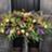 Petri's Floral & Boutique in Bellevue, KY 41073 Florists