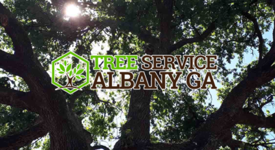 A to Z Tree Care in Albany, GA 31701 Lawn & Tree Service