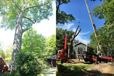 Silver Tree Services-Affordable Tree Removal Services Kennesaw GA in Kennesaw, GA 30144 Tree Service