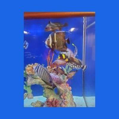 Crystal Oceans in Pompano beach, FL 33060 Aquariums