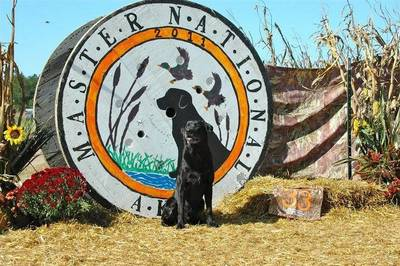 Silver State Kennels in Reno, NV 89506 Pet Boarding & Grooming