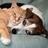 Animal Whispering in Longmont, CO 80503 Animal Behavioral Services