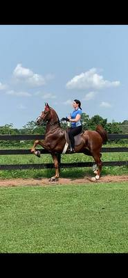 Silver Brook Stables in Louisville, KY 40241